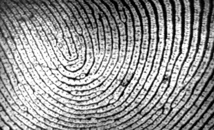 Top prof on why SA's biometric ID cards are a bad idea