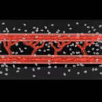 """Living"" blood vessels successfully 3D printed by researchers"
