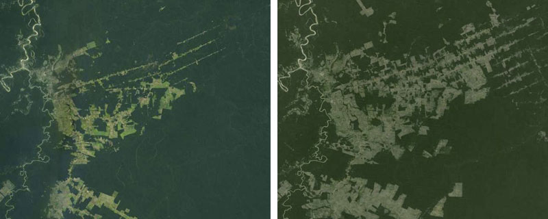 New Google satellite images show deforestation and has fewer ...