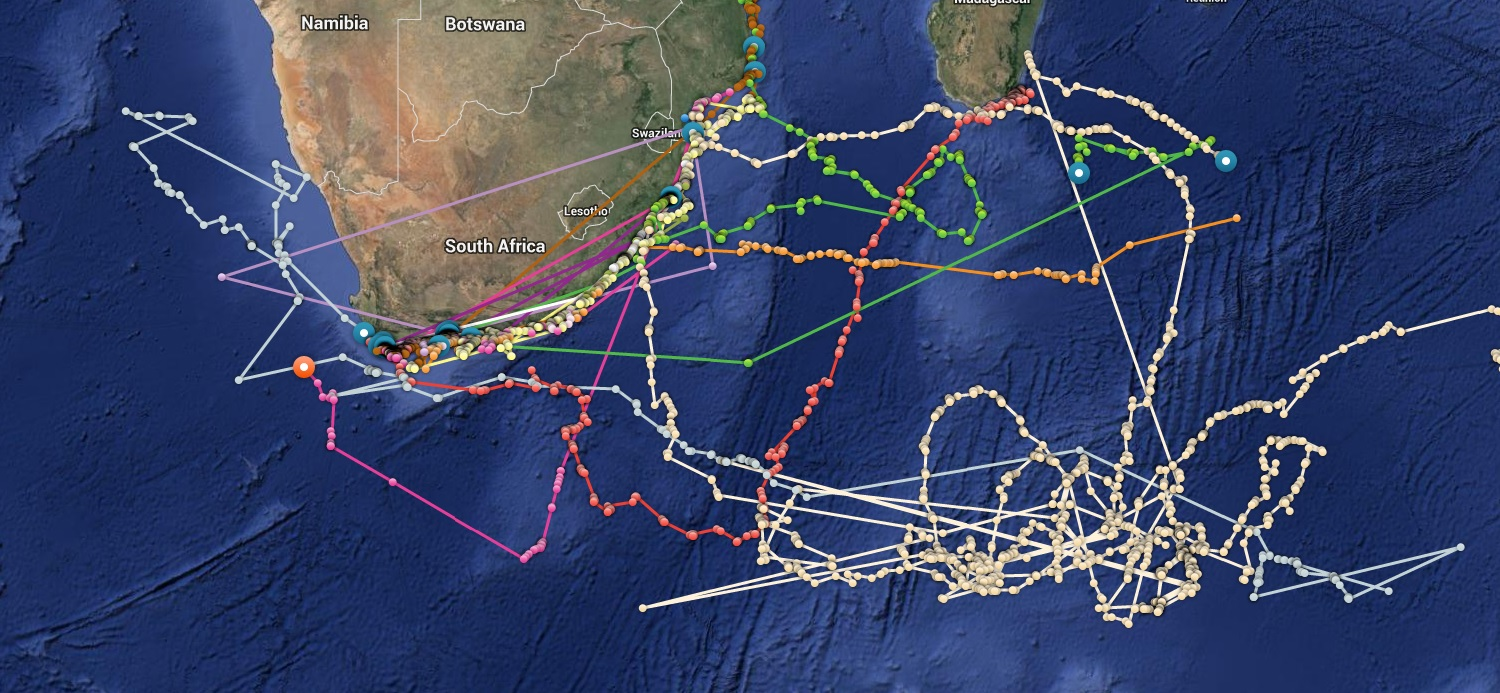 ping map with Tagging Tracking The Great White Sharks Of South Africa on Link C3 B6ping likewise 1138781500 moreover Changping 1 likewise 4570535478 in addition 3586911791.