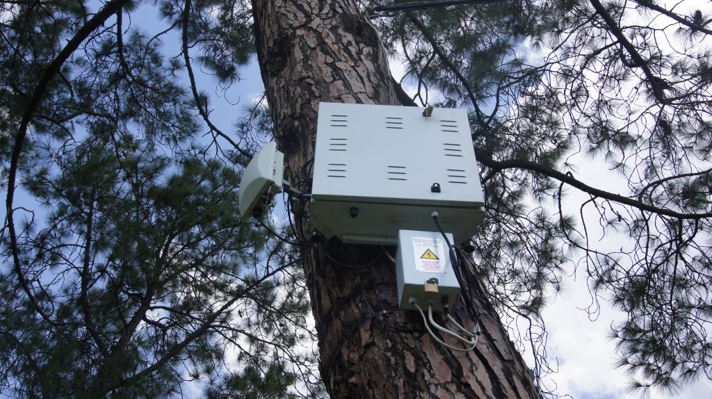 This tree has both roots and a router.