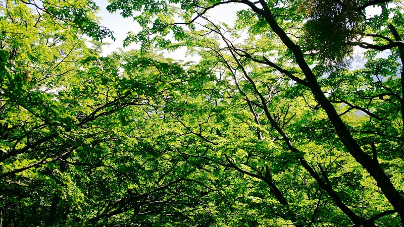 Man Made Trees Could Soon Provide Renewable Energy Htxt