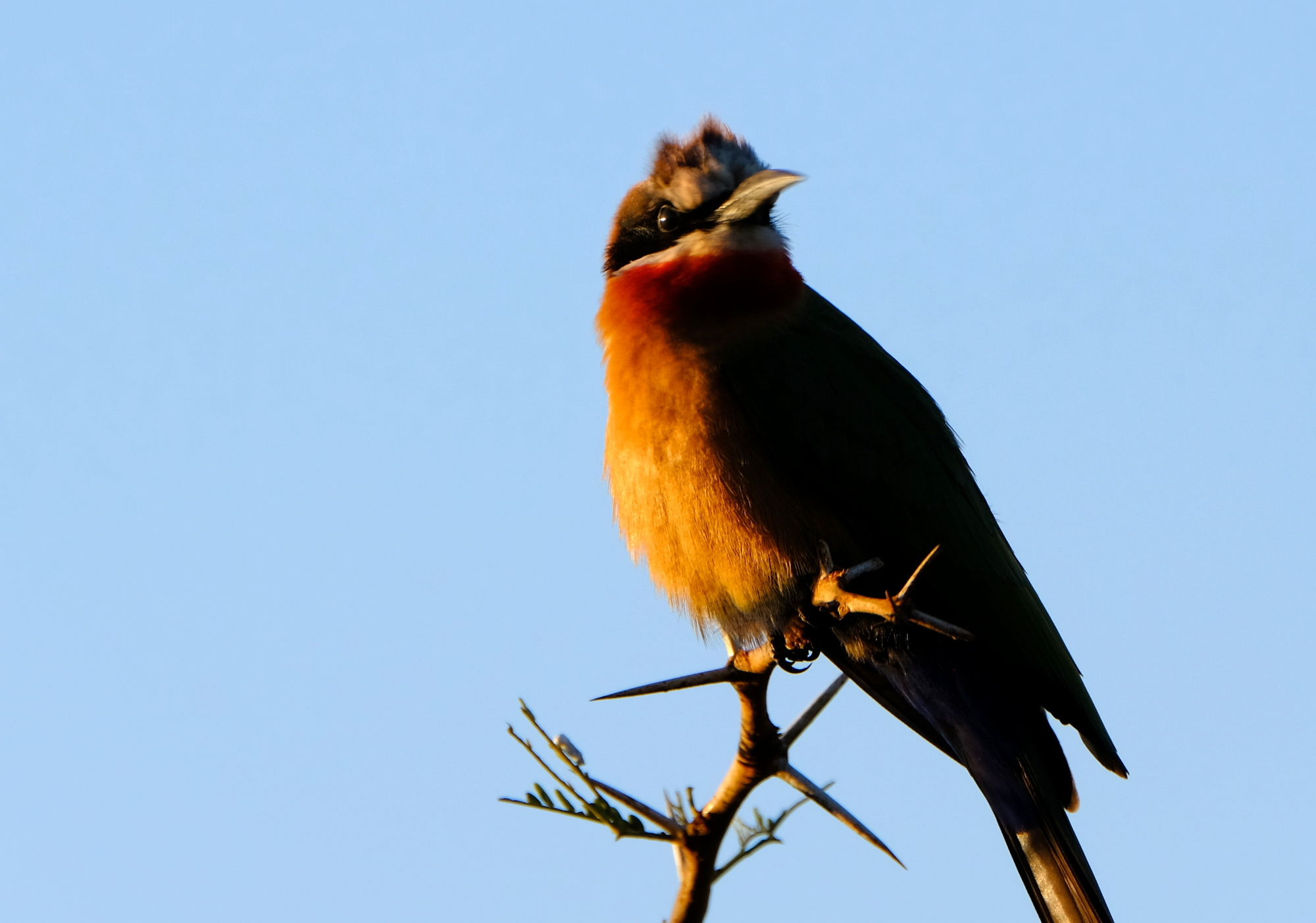 This bird was captured using the 100-400mm lens at full zoom.